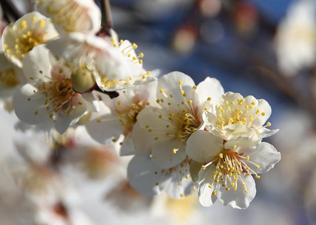 陽春の光を浴びて
