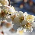 Photos: 陽春の光を浴びて