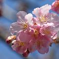 Photos: 春陽