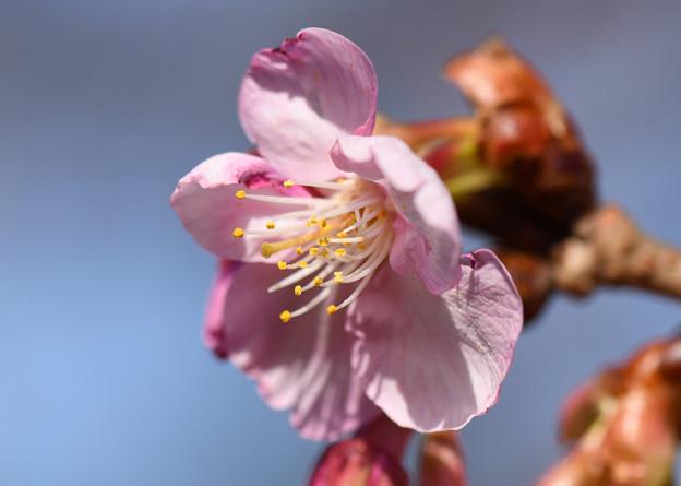 春の陽ざし