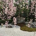 写真: 日本の春