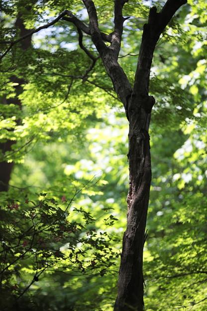 森林公園にて