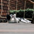 猫撮り散歩1728