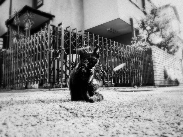 猫撮り散歩1754