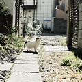 猫撮り散歩1784