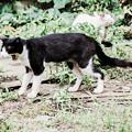 猫撮り散歩1811