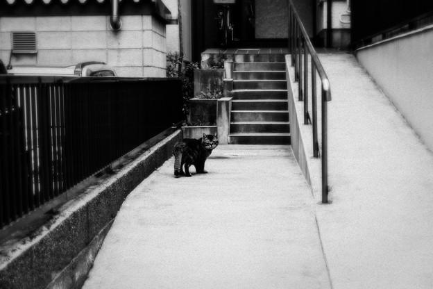 猫撮り散歩1833