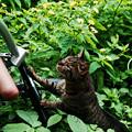 猫撮り散歩1840