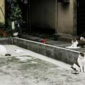 写真: 猫撮り散歩1994