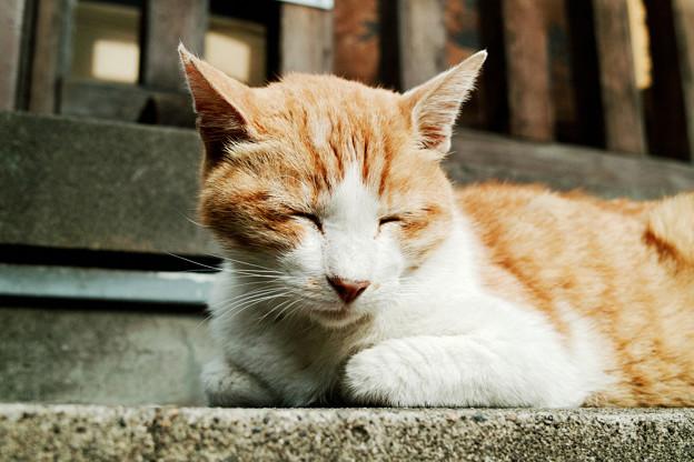 写真: 猫撮り散歩1995