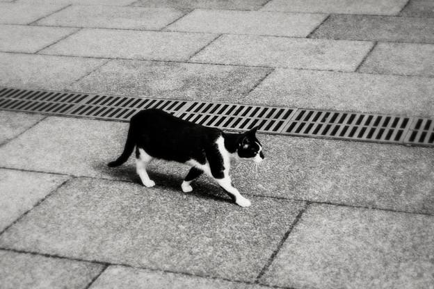 猫撮り散歩2002