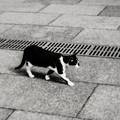 写真: 猫撮り散歩2002