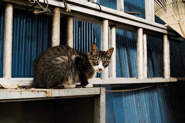 猫撮り散歩2007
