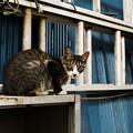 写真: 猫撮り散歩2007
