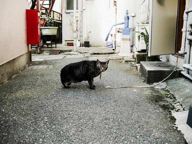 猫撮り散歩2008