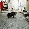写真: 猫撮り散歩2008