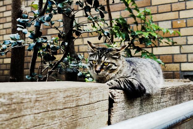 猫撮り散歩2012