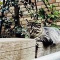 写真: 猫撮り散歩2012