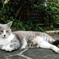 写真: 猫撮り散歩2013