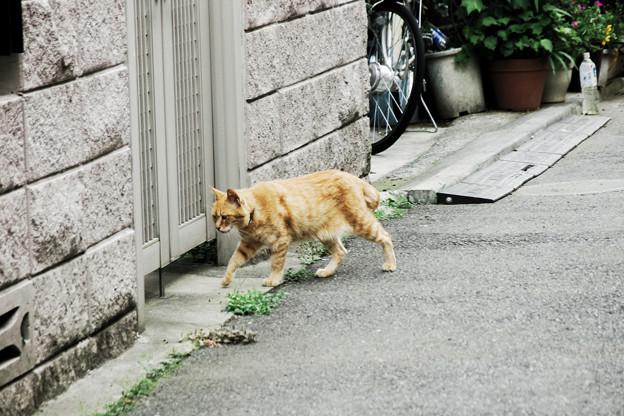 写真: 猫撮り散歩2014