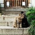 写真: 猫撮り散歩2016