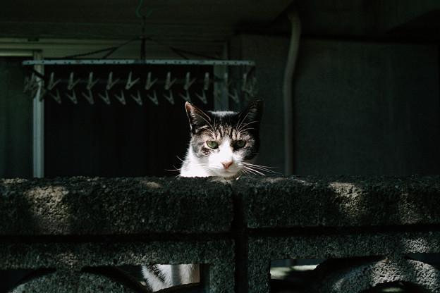 猫撮り散歩2019