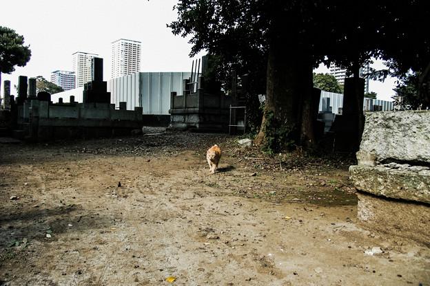 猫撮り散歩2023