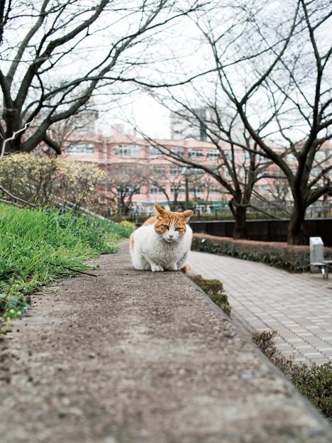猫撮り散歩2025
