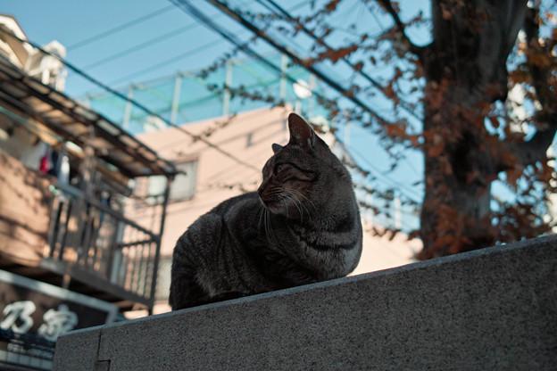 猫撮り散歩2028
