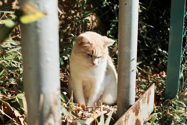 猫撮り散歩2031