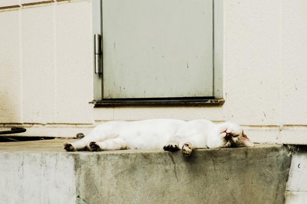 猫撮り散歩2036