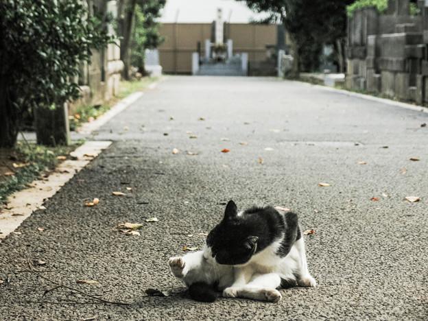 猫撮り散歩2041