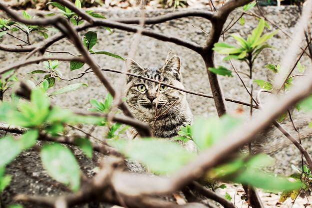 猫撮り散歩2042