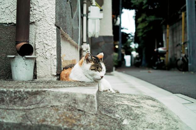 猫撮り散歩2043