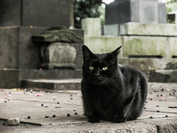 猫撮り散歩2045