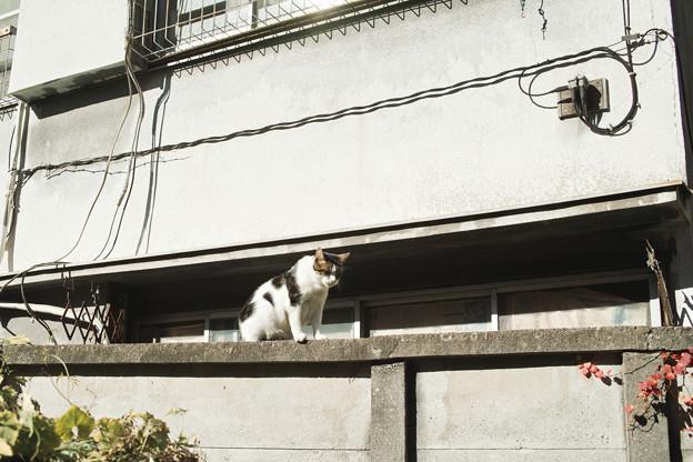 猫撮り散歩2046