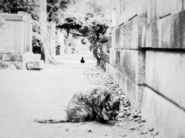 猫撮り散歩2053
