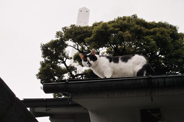 猫撮り散歩2055