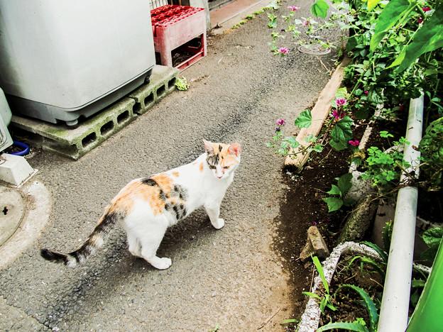 猫撮り散歩2068
