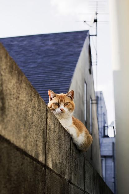 猫撮り散歩2069
