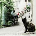 写真: 猫撮り散歩2072