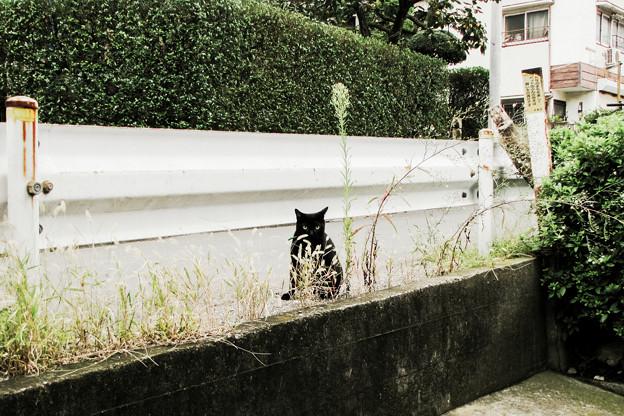 猫撮り散歩2074