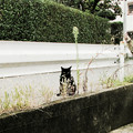 写真: 猫撮り散歩2074