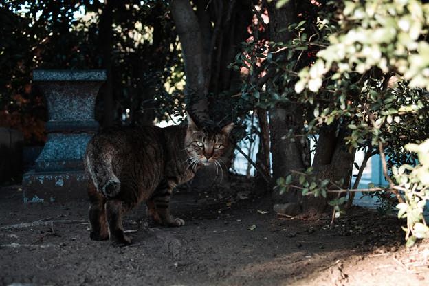 猫撮り散歩2079