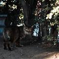 写真: 猫撮り散歩2079