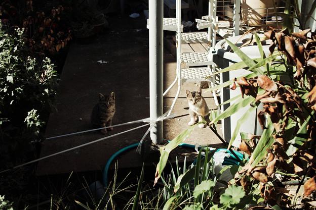 猫撮り散歩2082
