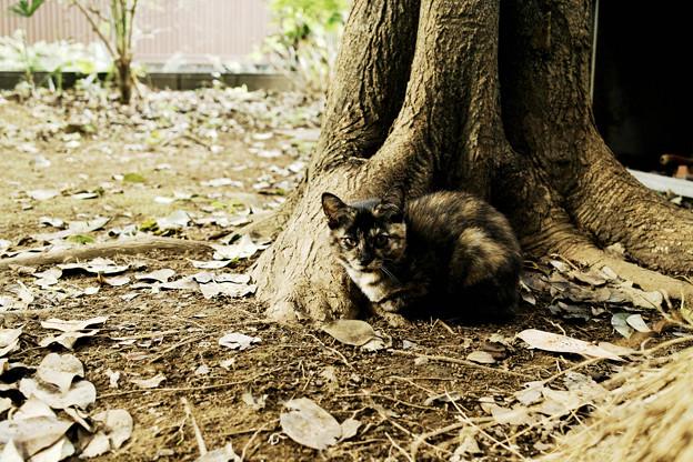 猫撮り散歩2085