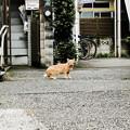 写真: 猫撮り散歩2086