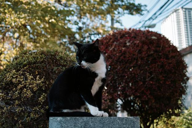 猫撮り散歩2088