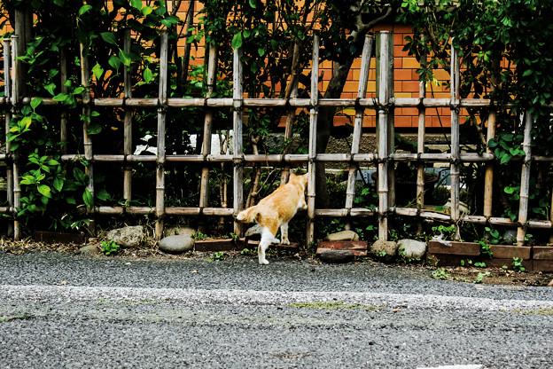 猫撮り散歩2089